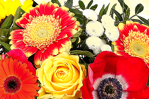 Blumen senden an Saupe Jochen